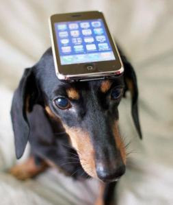 a-smartphone-is-your-dogs-best-friend-L-zRoVLt